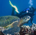 Scuba Diving on Maui, Maui Scuba Classes, Snorkeling Classes, Scuba Lessons, Diving Maui
