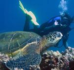 Scuba Diving on Maui, Maui Scuba Classes, Snorkeling Classes, Scuba Lessons, Diving Maui